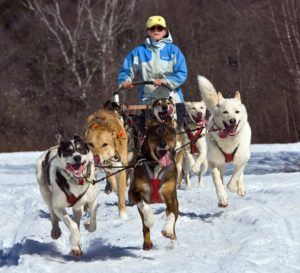 dog sledding in Cotton Brook